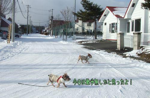 090116-maki8.jpg