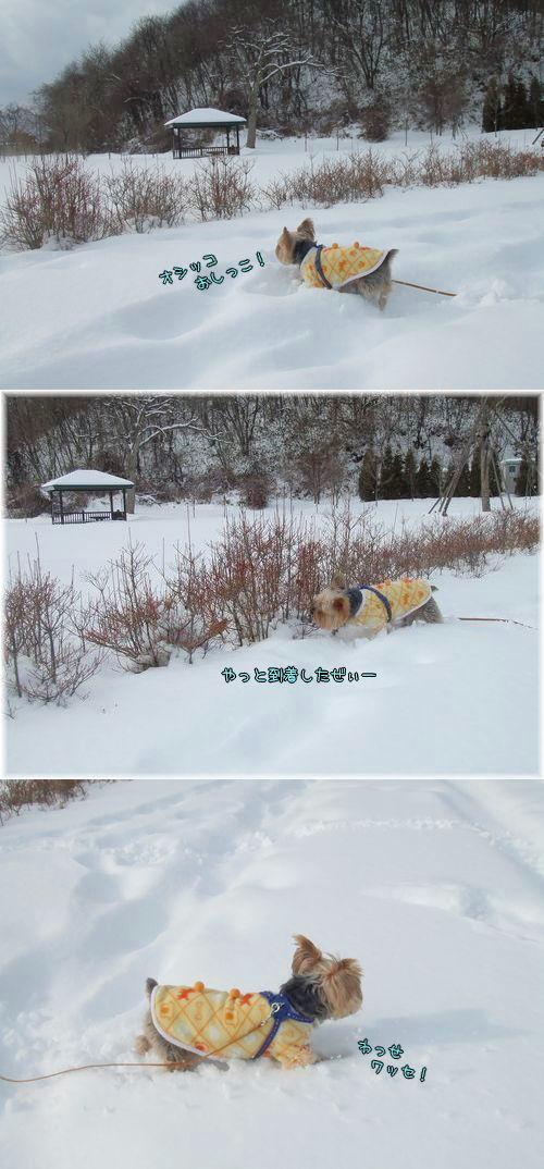 090222-ooyuki456.jpg