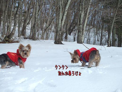 100119-yama3.jpg