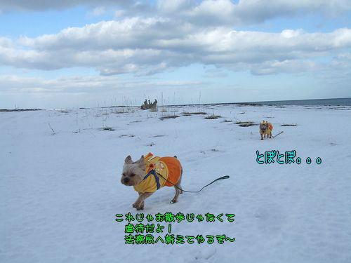 100124-umi2.jpg