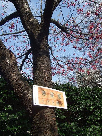 100317-tokyo6.jpg