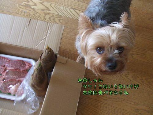 100413-niku2.jpg