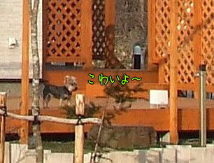 100416-koinobori8-1.jpg