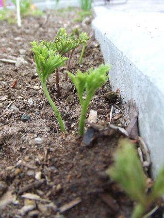 100601-anemone.jpg
