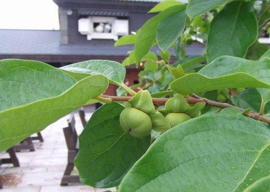 100804-zenkouji14.jpg