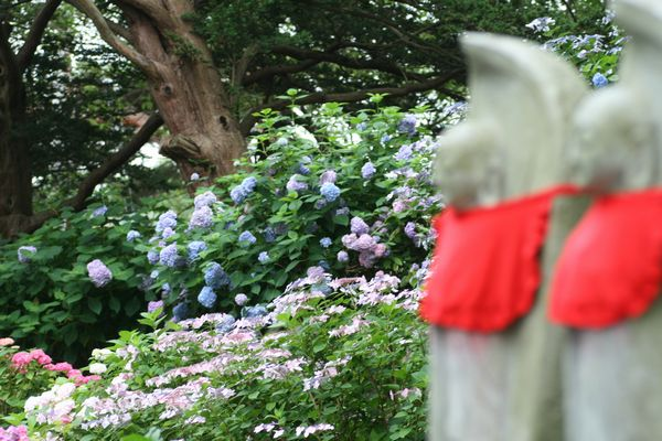 100804-zenkouji2-5.jpg