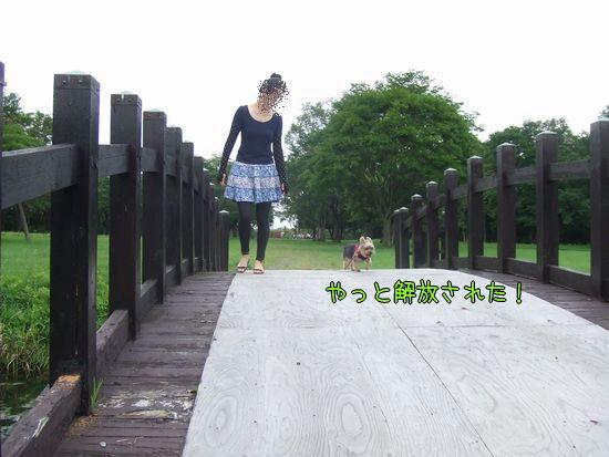 100817-jinya5.jpg