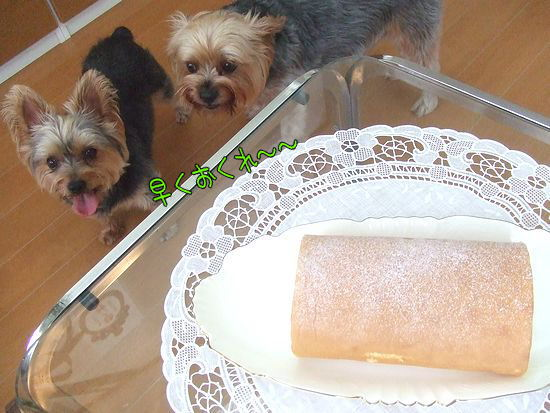 100819-cake2.jpg