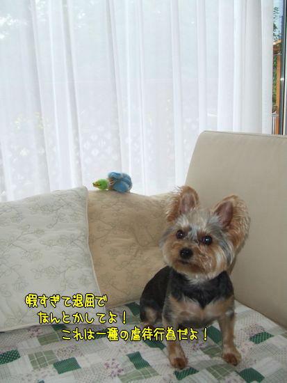 100925-ryou.jpg