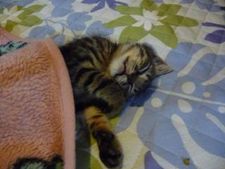 kiki寝る