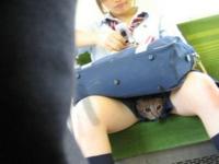 電車のシートに座る女子高生の股間にネコ?