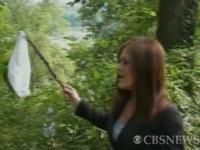 アメリカで林の中にパンティ約3000枚が捨てられていたらしい