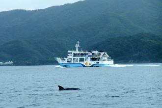 イルカとカケロマフェリー