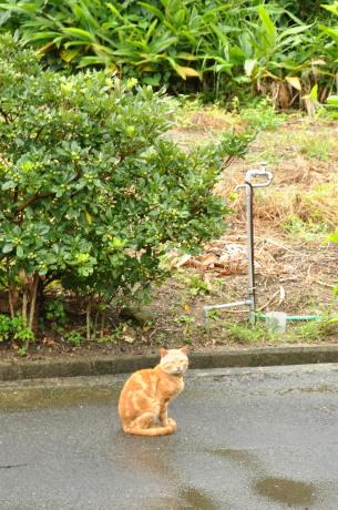 カケロマの猫