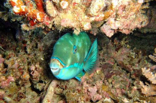 ナイトダイビング カケロマ島