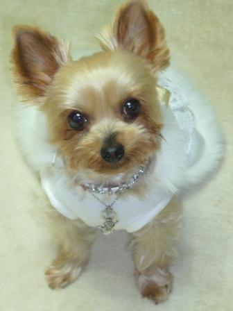 白ドレス正面