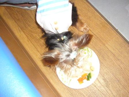 ささみを食べるラピ