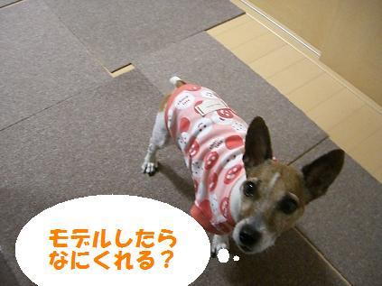 2006_0101_000103-CIMG5826.jpg