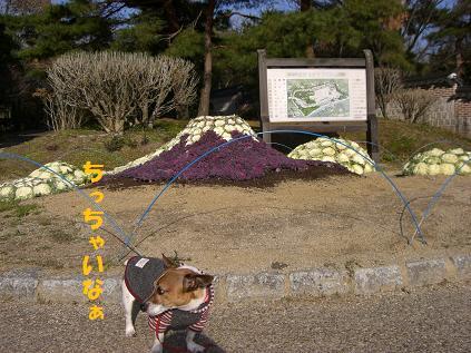 2006_0102_011426-CIMG3789.jpg