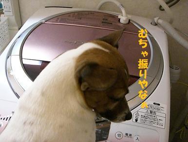 2006_0102_213211-CIMG3755.jpg