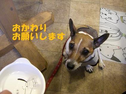 2006_0104_180353-CIMG5351.jpg