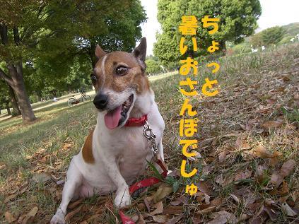 2006_0107_221300-CIMG5239.jpg