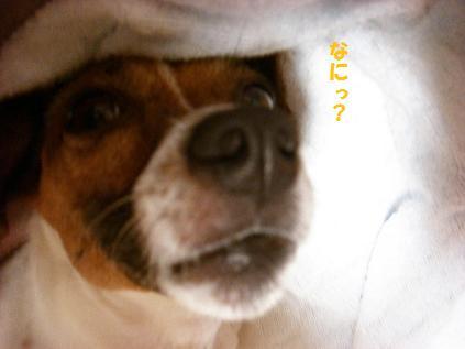 2009_0826_215713-CIMG2814.jpg