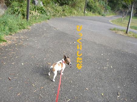 2009_0909_155524-CIMG2786.jpg