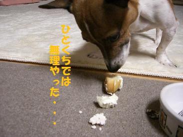 2009_0913_214842-CIMG2821.jpg