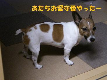 2009_0921_153340-CIMG2914.jpg