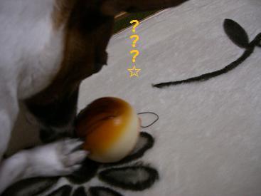 2009_1011_071757-CIMG2960.jpg
