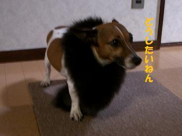 2009_1119_015619-CIMG3399.jpg