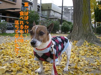 2009_1206_151219-CIMG3557.jpg