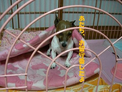 2009_1207_043451-CIMG3566.jpg