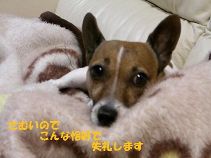 2009_1231_205911-CIMG3758.jpg