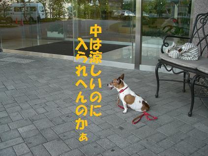 2010_0107_020225-CIMG5195.jpg