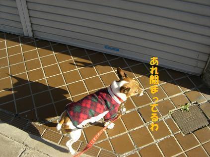 2010_0124_030701-CIMG3940.jpg