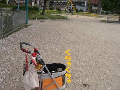 2010_0410_214245-CIMG4352.jpg
