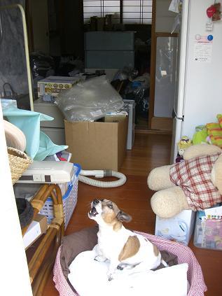 2010_0503_100010-CIMG4479.jpg