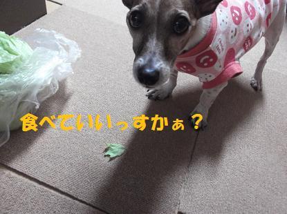 2011_0122_160540-DSCF1298.jpg