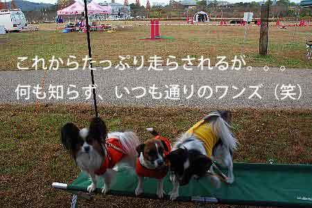 DSC_0005_20081125130138.jpg