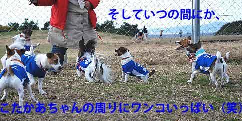 DSC_0018_20081201215603.jpg