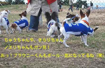 DSC_0022_20081201215607.jpg