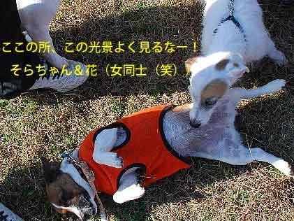 DSC_0038_20081125130202.jpg