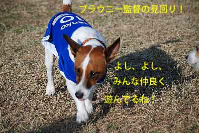 DSC_0110_20081201215712.jpg