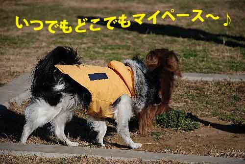 DSC_0136_20090205124216.jpg