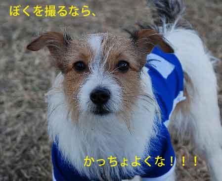 DSC_0139_20081201215715.jpg