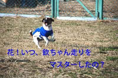 DSC_0168_20081201215734.jpg