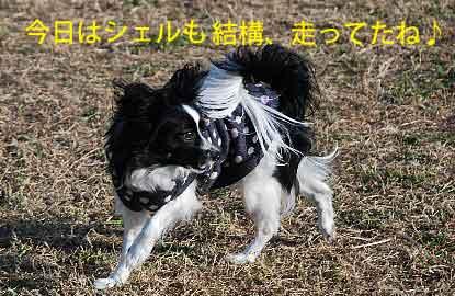 DSC_0188_20081201215750.jpg