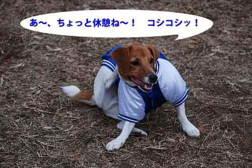 DSC_0189_20081222212704.jpg